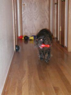 dog games for kids<img src=